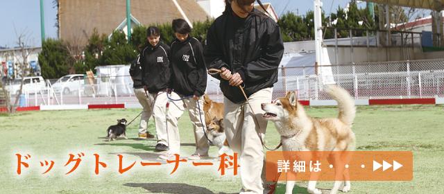 trainer6